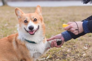 Positive Reinforcement Training for Dogs